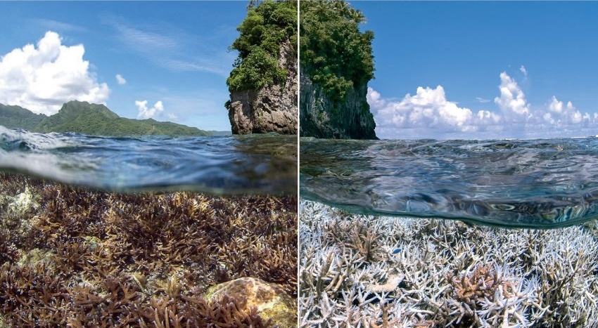 dying_corals-1-982417-edited.jpg